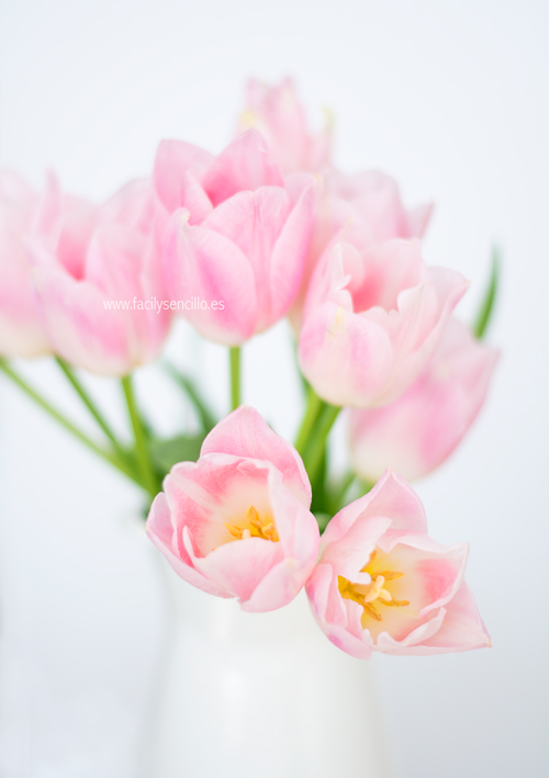 FacilySencillo_Tulipanes_03
