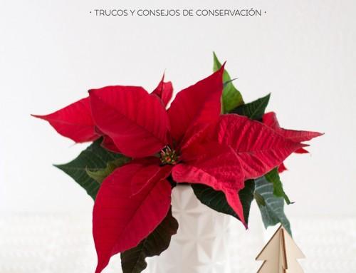 DIY · CENTRO NAVIDEÑO CON FLOR DE PASCUA*