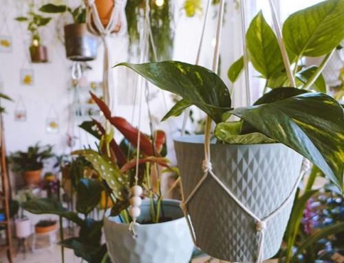 PLANTAS COLGANTES: UNA TIENDA EN AMSTERDAM